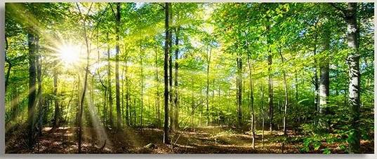 Marmony Infrarotheizung M800 PLUS Forest + Thermostat 800W Bild 1